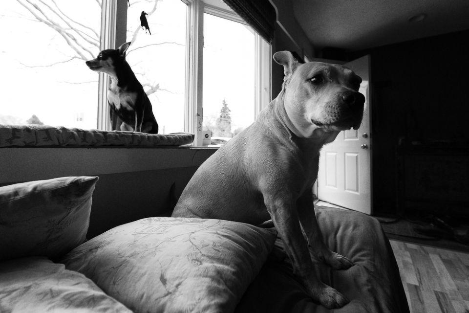 байкеры_спасенная собака